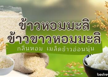 ข้าวหอมมะลิ ข้าวขาวหอมมะลิ ยี่ห้อไหนอร่อยที่สุด