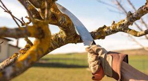 เลื่อยมือ (Hand saw) สำหรับตัดกิ่งไม้ ที่ดีที่สุด
