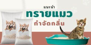 10 อันดับ ทรายแมว ที่ดีที่สุด ที่ทาสแมวไม่ควรพลาด ปี 2021