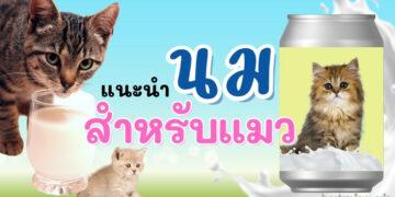 รีวิว นมสำหรับแมว ที่ดีที่สุด