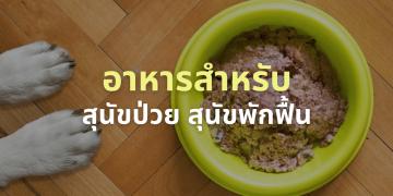อาหารสุนัขป่วย หรือกำลังพักฟื้น