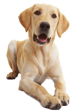 6 สายพันธ์สุนัขที่นิยมเลี้ยงในไทย