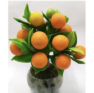"""ต้นส้ม ต้นไม้มงคล """"เป็นมงคล ความดีงาม ความผาสุก"""""""