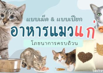 อาหารแมวแก่