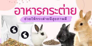 รีวิว อาหารกระต่าย ยี่ห้อไหนดีที่สุด ปี 2021