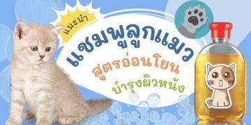รีวิว แชมพูสำหรับลูกแมว สูตรอ่อนโยน บำรุงผิวหนัง ยี่ห้อไหนดีที่สุด