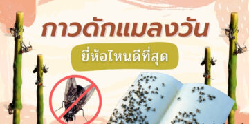 รีวิว กาวดักแมลงวัน ยี่ห้อไหนดีที่สุด ปี 2021