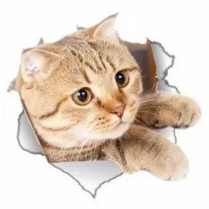 สติกเกอร์ติดผนัง วอลเปเปอร์แปะผนัง 3 มิติ ลายแมว