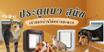 รีวิว ประตูแมว - สุนัข เข้าออกบ้านได้อย่างสะดวก ยี่ห้อไหนดีที่สุด ปี 2021