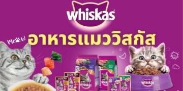 อาหารแมววิสกัส สูตรไหนดี ปี 2021