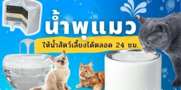รีวิว น้ำพุแมว กรองน้ำสะอาด ให้น้ำสัตว์เลี้ยงได้ตลอด 24 ชั่วโมง ยี่ห้อไหนดีที่สุด ปี 2021