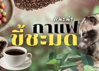 แนะนำ กาแฟขี้ชะมด ที่อร่อยที่สุด