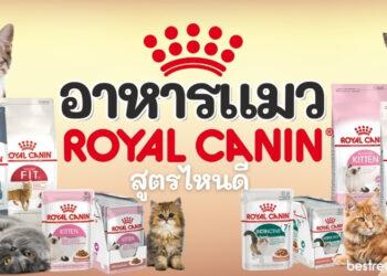 รีวิว อาหารแมว royal canin สูตรไหนดีที่เหมาะกับเจ้าเหมียวของเรา ปี 2021