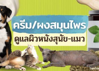 รีวิว ครีม/ผงสมุนไพรดูแลผิวหนังสุนัข แมว สัตว์เลี้ยง