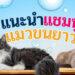 แนะนำ แชมพูสำหรับแมวขนยาว ยี่ห้อไหนดีที่สุด